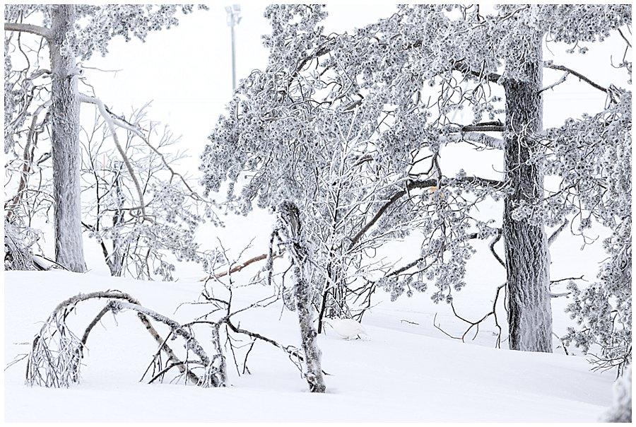 Finland 2017-023