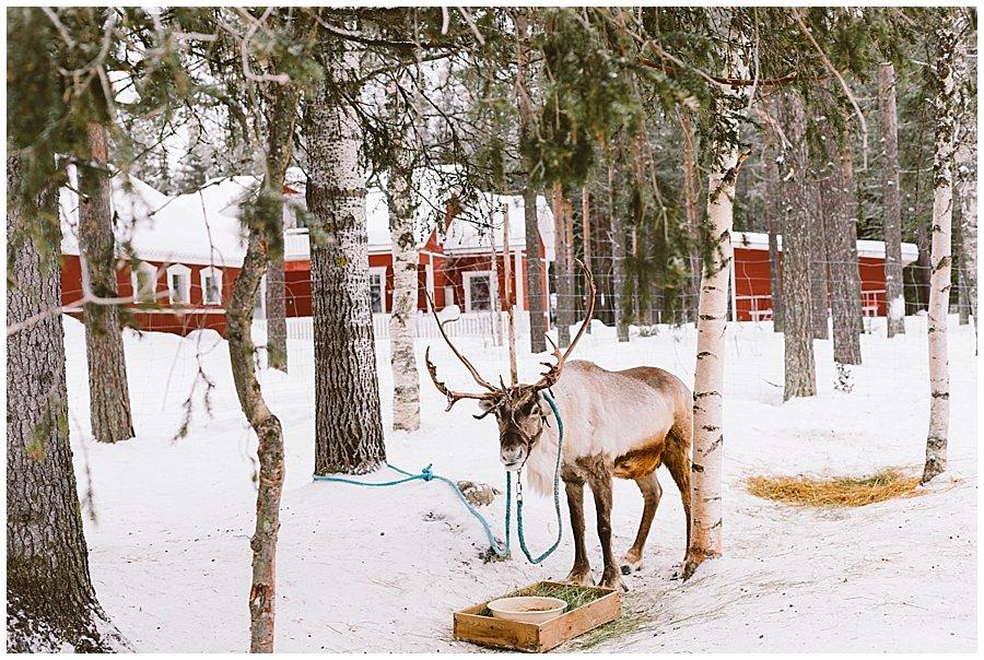 Santa's Pet Farm Levi
