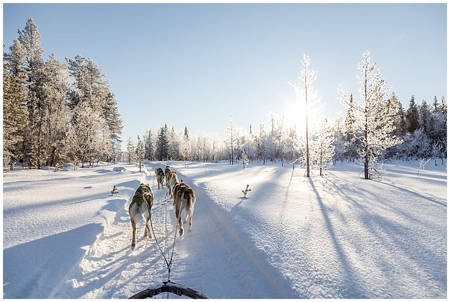Wingrens Dog Safari Lapland