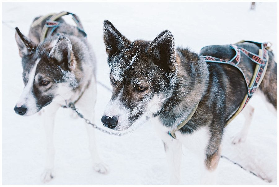 Wingrens Husky Safari Lapland