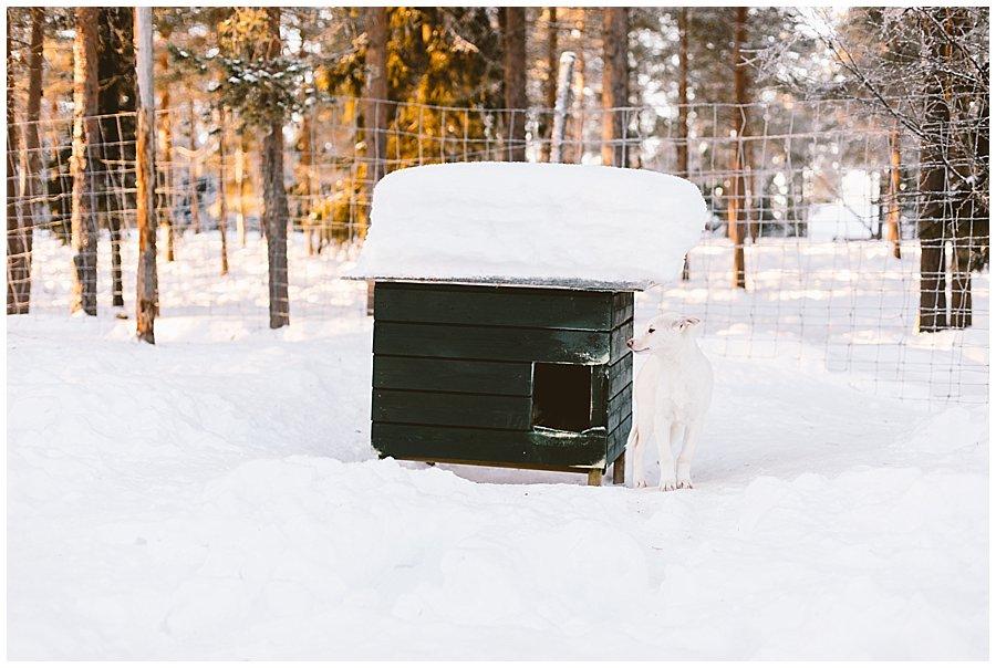 Finland 2017-126