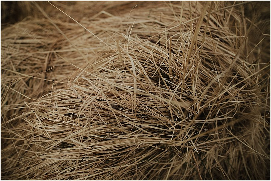 Picture of long dry grass